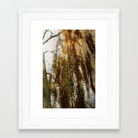 birch Framed Art Prints featuring Birch by TakaTuka Photo