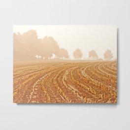 Corn Field in NRW  Metal Print
