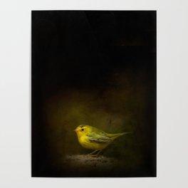 Wilson's Warbler Vignette Poster