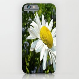 Close Up Common White Daisy With Garden iPhone Case