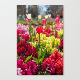 Red tulip surrounded by flowers Canvas Print