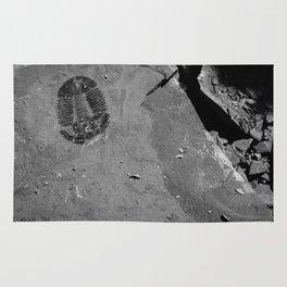 Utah - Trilobite Fossil Shards Rug