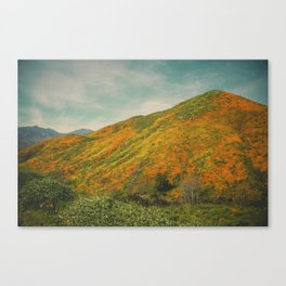 California Poppies 023 Canvas Print