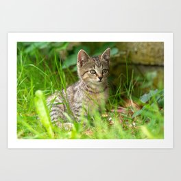 Beautiful Baby cat in the Grass Art Print