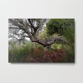 Laurisilva, the primeval forest in the midlands of Madeira Metal Print