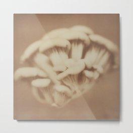Polaroid Series: Fungi Metal Print