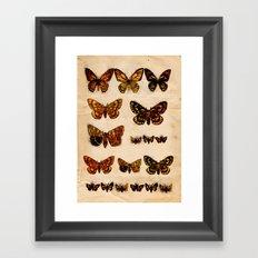 Butterflies and Moths Framed Art Print