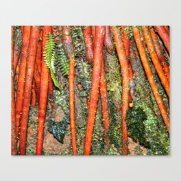 The Strong red ROOTS of The Sierra Palm in El Yunque rainforest PR Canvas Print