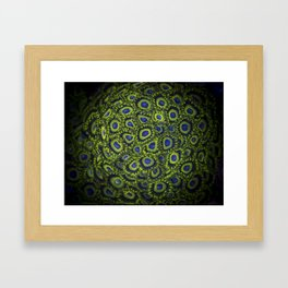 "Coals Zoanthus ""Lakers"" Framed Art Print"
