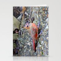 cardinal Stationery Cards featuring Cardinal by MyLove4Art