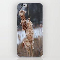 Cattail iPhone & iPod Skin