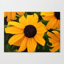 Yellow & Black Canvas Print