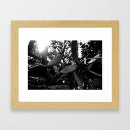 Beach Cactus Framed Art Print