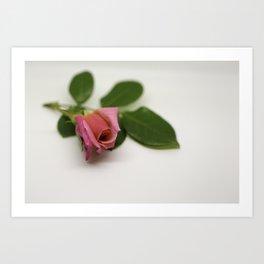 Solitairy Rose Art Print
