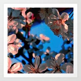 Blooming in White Var. Art Print