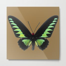 Rajah Brooke Birdwing Metal Print