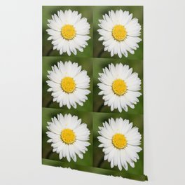 Closeup of a Beautiful Yellow and White Daisy flower Wallpaper