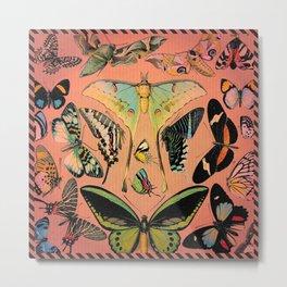 Butterfly Study Metal Print