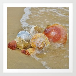 Sea Shells by the Seashore Art Print