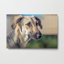 Greyhound's head dog looking away Metal Print