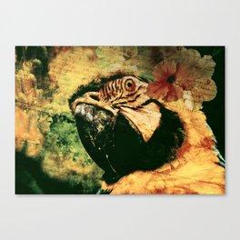 Perroquet  Canvas Print