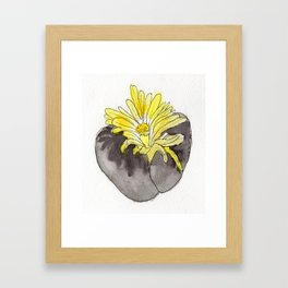 Lithops Blooming Framed Art Print