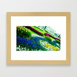 Multicolored tulips. Framed Art Print