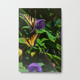 Swallowtails in the Bush Metal Print