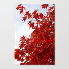 Maple Canopy Canvas Print