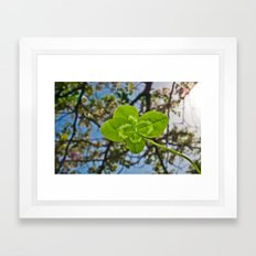 Four-Leaf Clover & Sun-flare Framed Art Print