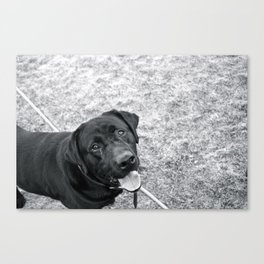 hank! Canvas Print