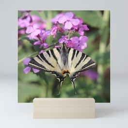 Swallowtail Butterfly On Money Flower Mini Art Print