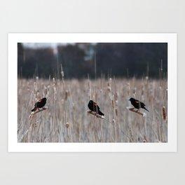 Blackbirds Singing Art Print
