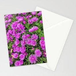 Gazania flower  blooming in the garden of Hamdeok restaurant, Jeju Stationery Cards