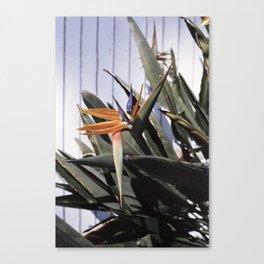 sun+flower Canvas Print