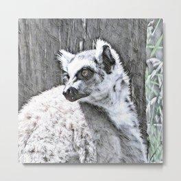Impressive Animal - Katta Metal Print