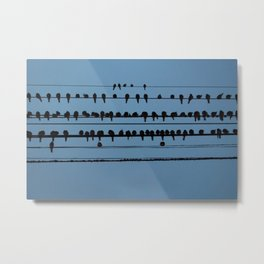 birds on a wire feeling blue Metal Print
