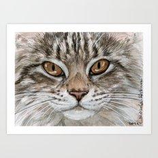 Young Tabby Cat Art Print