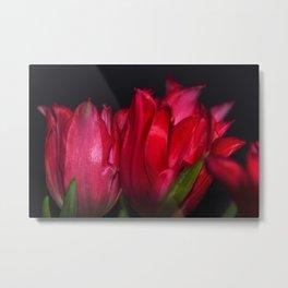 red tulip5 Metal Print