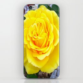 Golden Yellow Rose with Garden Background iPhone Skin