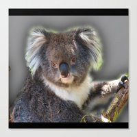 koala Canvas Prints featuring Koala by SwanniePhotoArt
