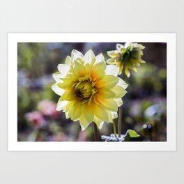 Dahlia In The Garden / 30 Art Print