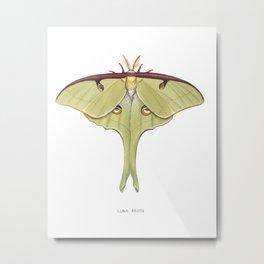 Luna Moth Metal Print
