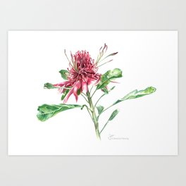 Red Protea Art Print