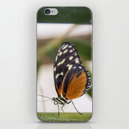 Buttefly at rest iPhone Skin