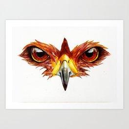 Hawk Eyes  Art Print