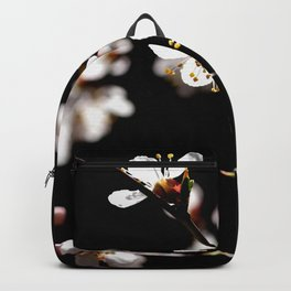 Marvelous Japanese Apricot Flowers. Play Of Light And Shadows. Black Background Backpack