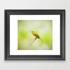 Yellow Warbler Framed Art Print