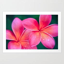 Aloha Hawaii Kalama O Nei Pink Tropical Plumeria Art Print