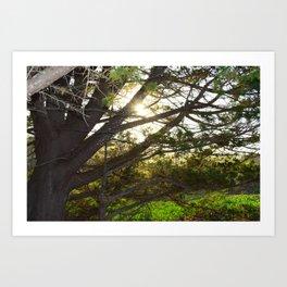 sunset through tree Art Print